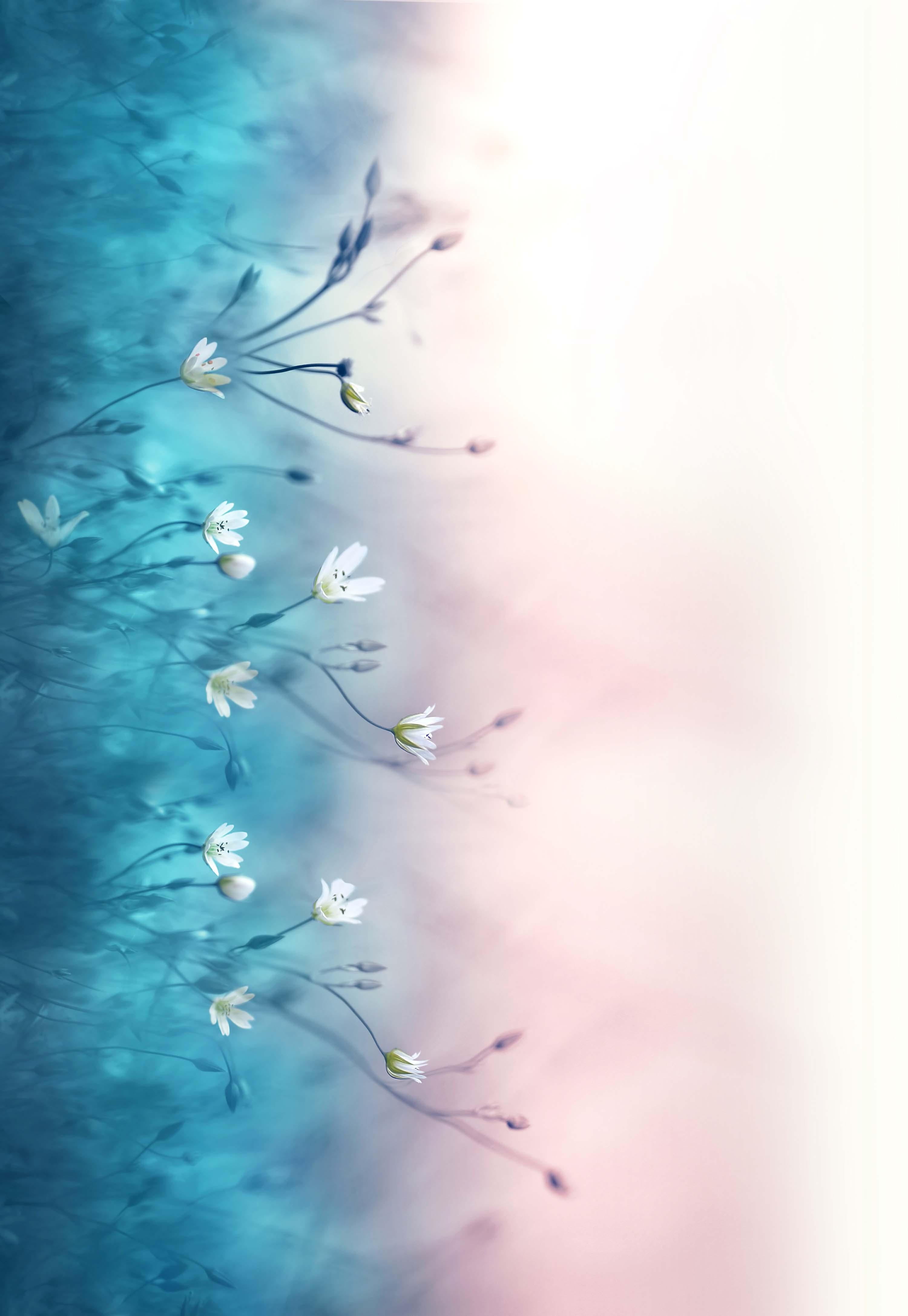 Baumwolljersey - Little Flowers - Bordüre - Schnuckidu Eigenproduktion - Vorbestellung